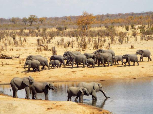 Safari au Zimbabwé