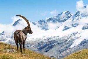 Vacances d'hiver : cap vers le retour aux sources avec des séjours nature et bien-être !