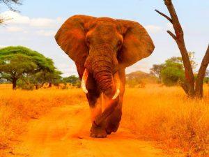Les particularités d'un voyage en Afrique