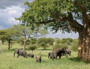 La Tanzanie, un pays magnifique qui résume le cœur de l'Afrique
