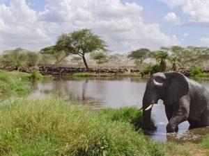 Explorer les havres de paix de la Tanzanie pour apercevoir une biodiversité riche