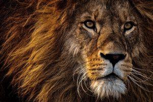 L'Afrique, une destination qui transporte loin de l'imaginaire