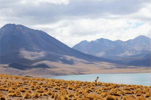 Les spécialités culinaires à découvrir à l'occasion d'un voyage au Chili