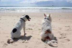 Quelles précautions avant d'emmener son chien en vacances ?